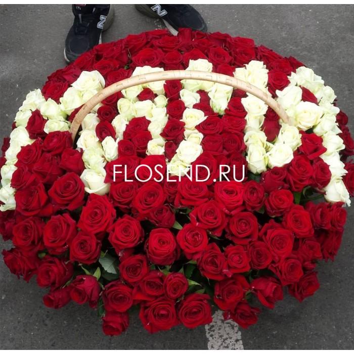 155 красная и белая роза